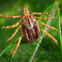 Symptonen ziekte van Lyme